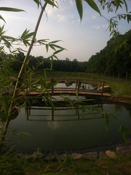 honesuckle garden.jpg