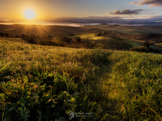Podere Belvedere ( Val D'Orcia ) - Matteo Andrei Photography