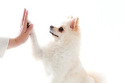 湘南,ペット撮影,フォトスタジオ