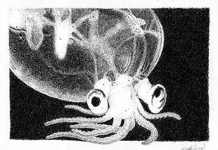 squid001_edited.jpg