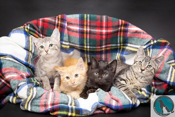 kittens in basket.jpg