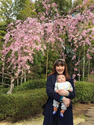 松戸 戸定邸のしだれ桜