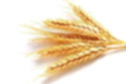 Декларация на зерно пшеницу, подсолнечник, кукуруза, протокол испытаний