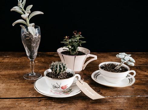 Succulentes & cactées - Photo ©Ludozme