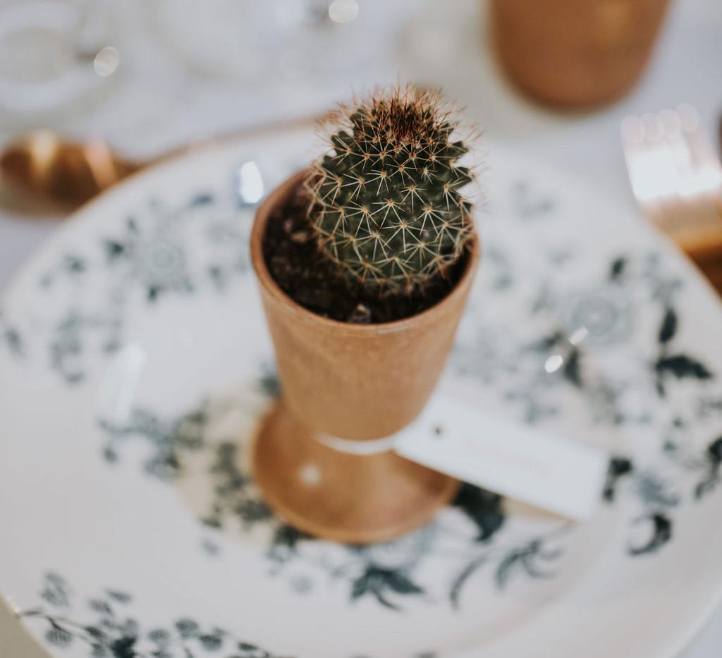 """Succulentes & cactées - Photo ©Vivien Bluteau """"Il était une fois"""""""