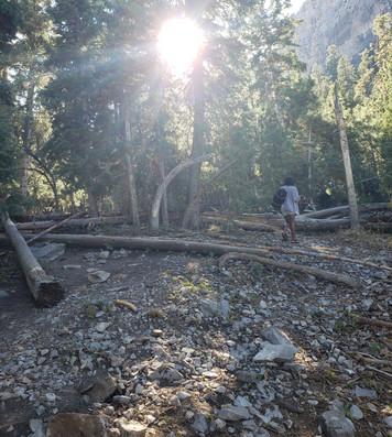 woods_2