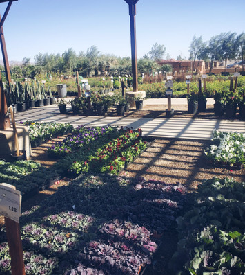 Gardening_7.jpg