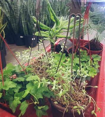 Gardening_4.jpg