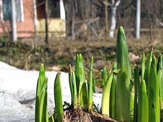 Календарь работ в саду и на огороде на апрель