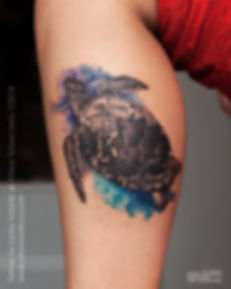 watercolour-turtle-tattoo-at-aliens-tatt