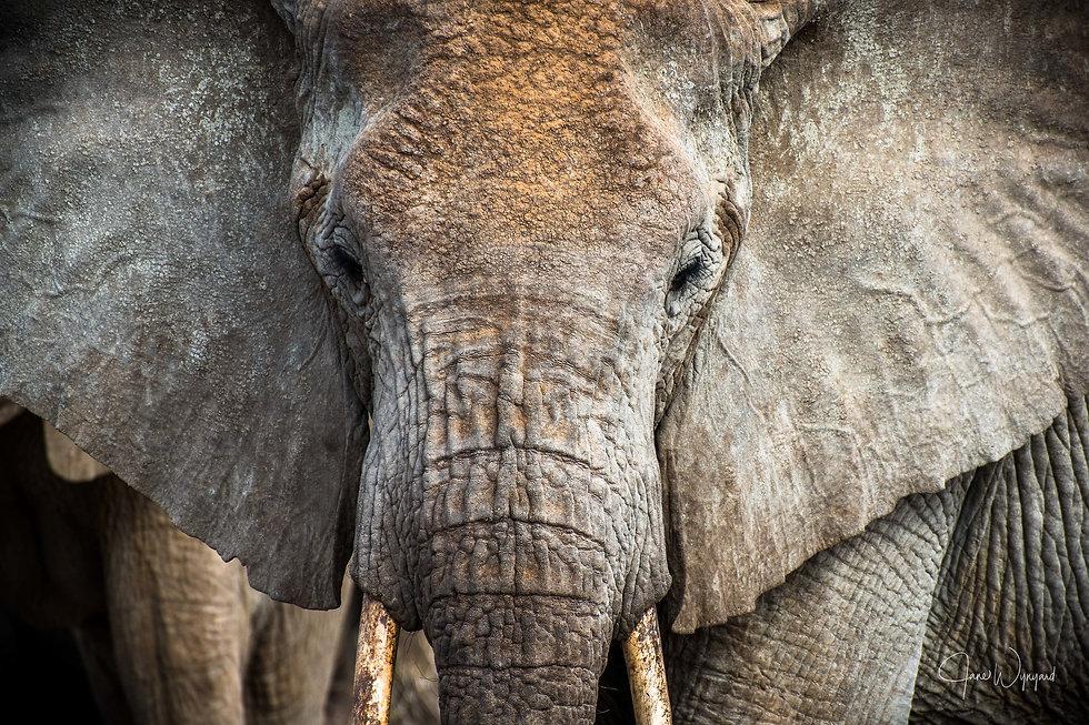 Shaba elephants - @ janewynyard (1).jpg