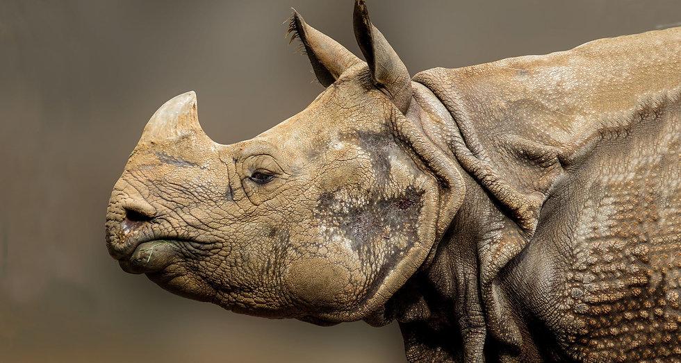 rhino-greateronehorned_edited_edited.jpg