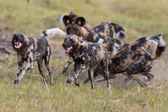 dog (c) Suzi Eszterhas.jpg