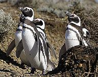 7-penguin.jpg