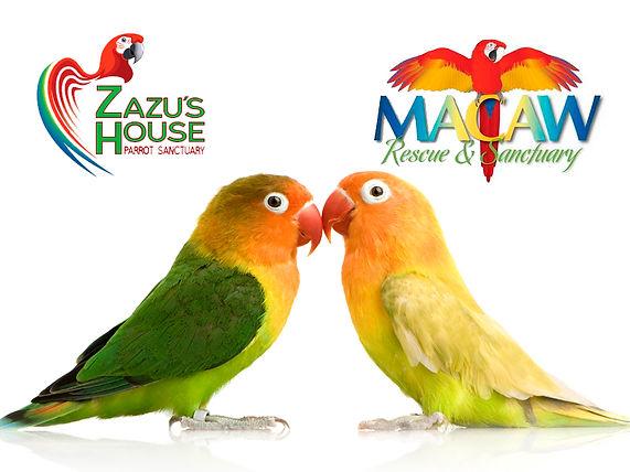 Zazu & Macaw Rescure.jpg