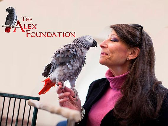 The Alex Foundation.jpg