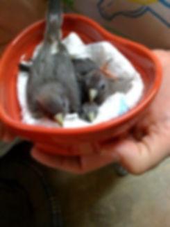 Mousebird.jpg