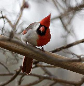 chimera-bird.jpg