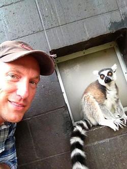 Ring_tailed_lemur