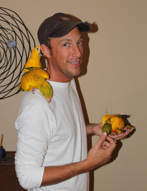 Golden_Conure_chicks