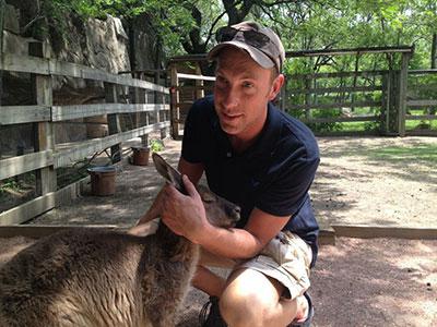 Grey_kangaroo