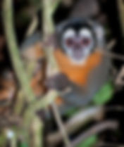 6-owlmonkey.jpg