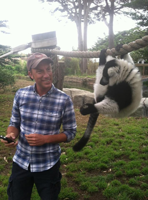black_and_white_lemur