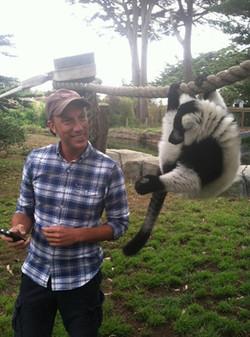 black_and_white_lemur
