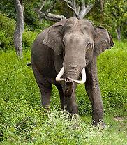 10-elephant.jpg