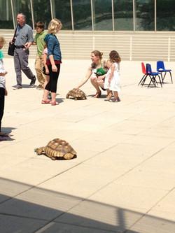2013_World_Turtle_Day