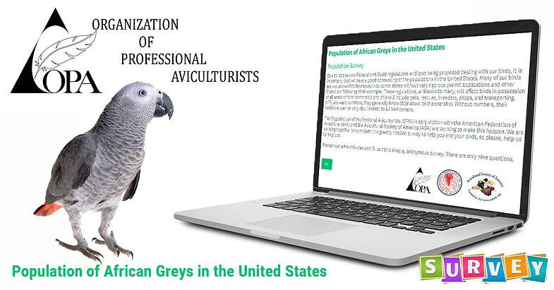 african Grey Survey.jpg
