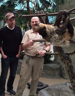 Sloth_Brookfield_Zoo