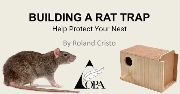 Rat Trap.jpg