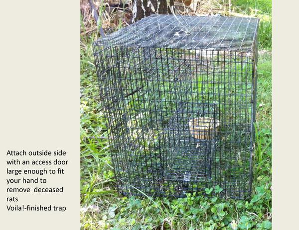 BUILDING A RAT TRAP slides-14.jpg