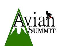 Avian Summit.jpg
