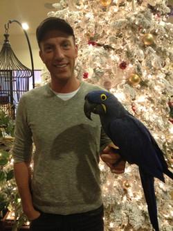Coco_hyacinth_macaw