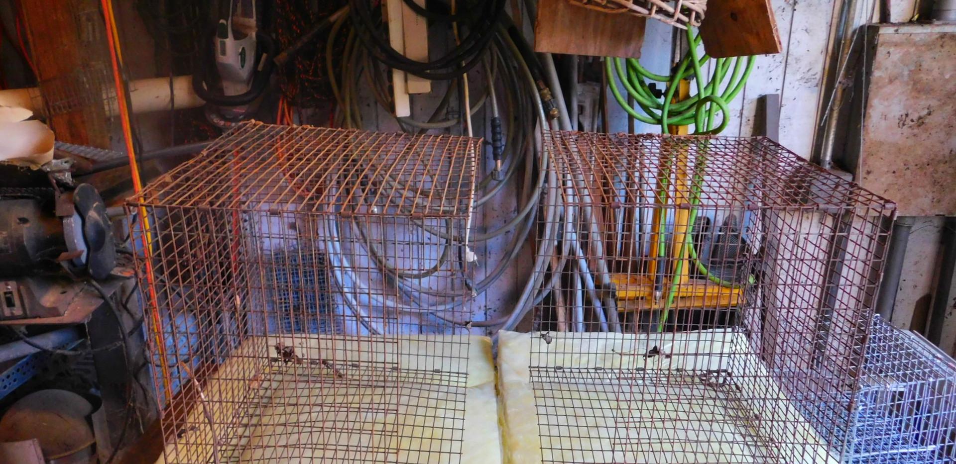 BUILDING A RAT TRAP slides-3.jpg