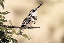 MitMensch Geschichten: Die Vögel singen hören