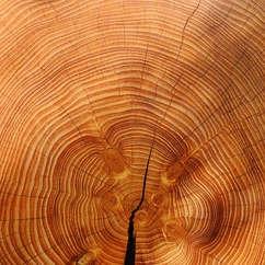 wood-3212803_640.jpg