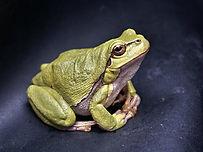 MitMensch Geschichten: Der Frosch im Brunnen