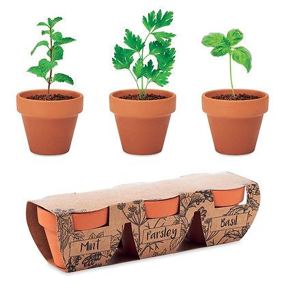FLOWERPOT. Conjunto de 3 ervas  em vasos terracota