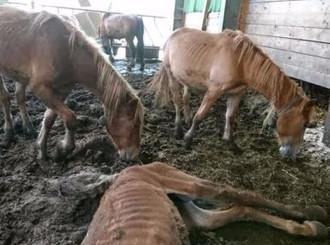 SP-Grossräte fordern Tieranwalt | 20 Minuten, 08.09.2017
