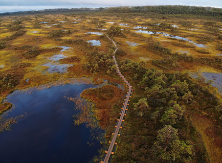 11 Reasons To Visit A Bog On Your Estonia Roadtrip