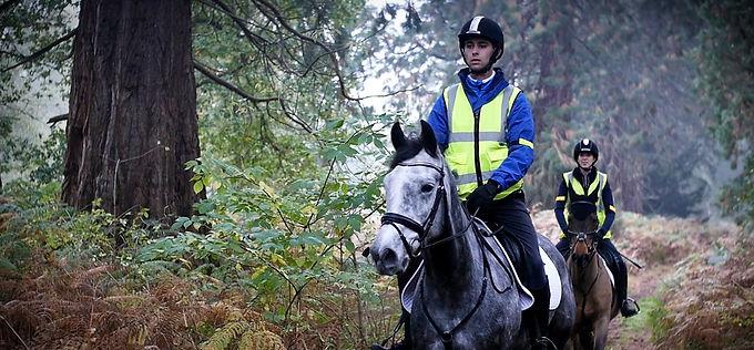 Horses_edited_edited.jpg