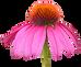 Les Elixirs Floraux face aux Crises de la Vie