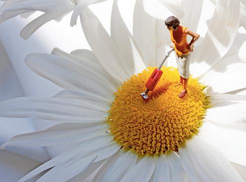 Vacuuming a daisy.png