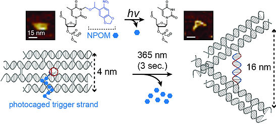 Rapid photo-actuation of a DNA nanostructure using an internal photocaged trigger strand