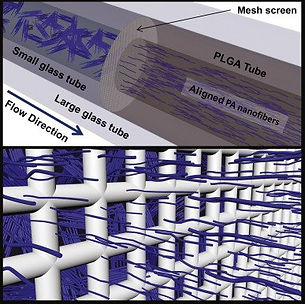 A bioengineered peripheral nerve construct using aligned peptide amphiphile nanofibers