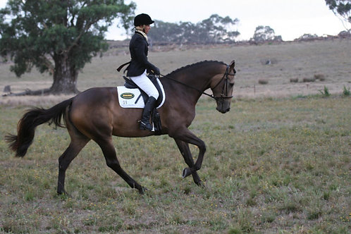 DVD - GREEN TO DRESSAGE