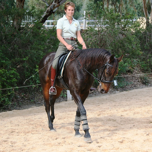 DVD - RE-TRAINING THE STANDARD BRED
